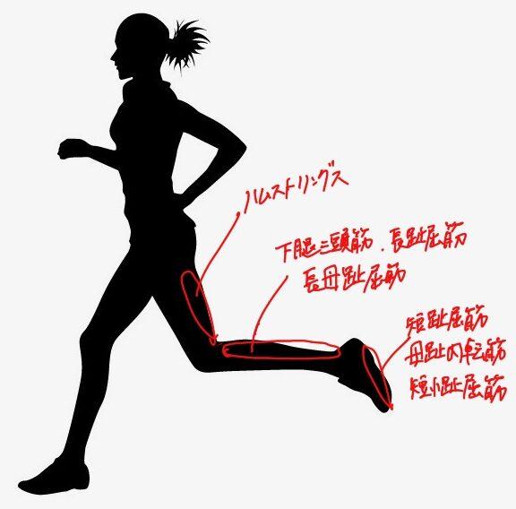 ランニングにて地面を蹴る動作に活動する筋肉
