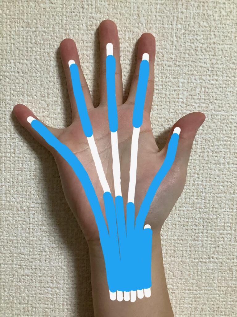 手のひら側にある腱鞘の位置