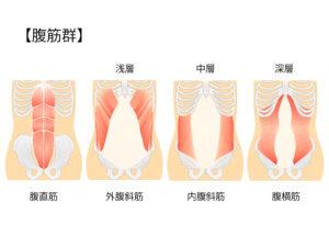 腹筋群と呼ばれる腹直筋、外腹斜筋、内腹斜筋、腹横筋