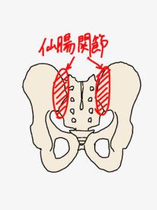 寛骨と仙骨にて構成される仙腸関節は腰痛の起きやすい場所