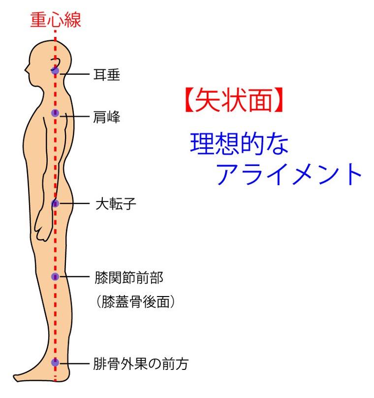 理想的なアライメントの画像です。耳垂・肩峰・大転子・膝関節前部(膝蓋骨後面)・腓骨外果を重心線が通るときニュートラルポジションとも言われています。