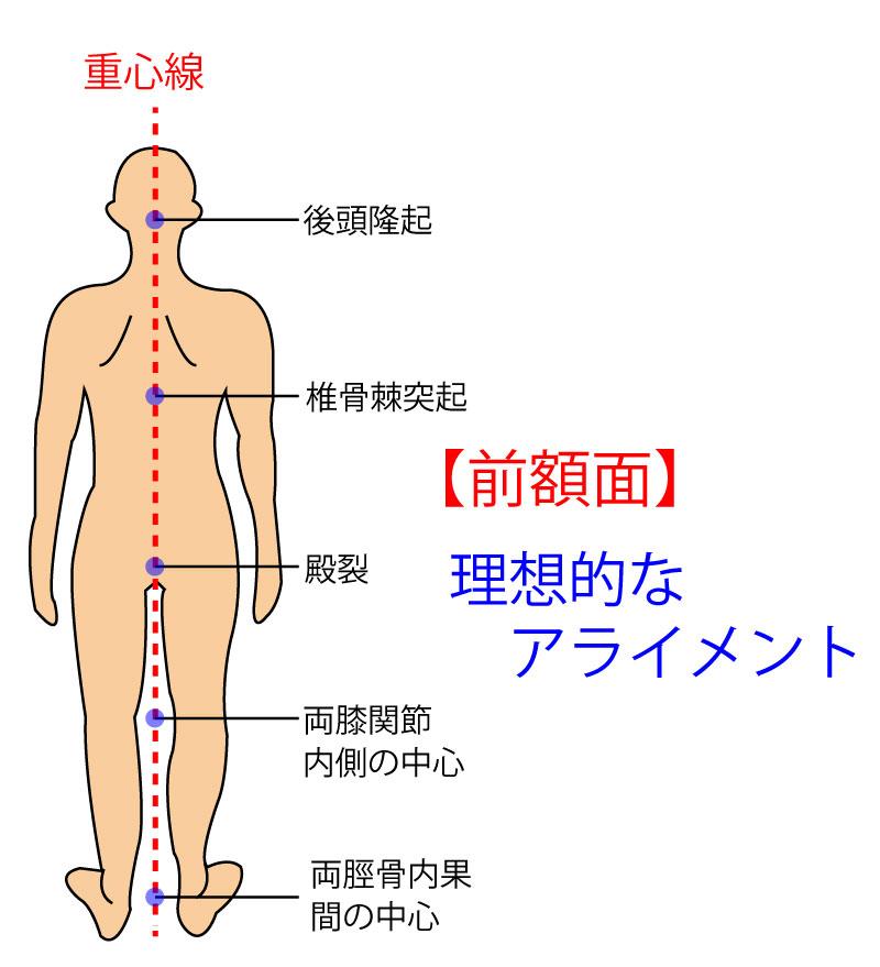 理想的なアライメントの画像です。外後頭隆起・椎骨棘突起・殿裂・両膝関節を結んだ線の中央・両脛骨内果を結んだ線の中央を重心線が通るときニュートラルポジションとも言われています。